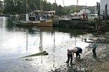 Gutane leikar i fjæra. Til kaien ligg MK Tennfjord som fekk prisen for beste båt på Torgdagen i Bergen i 2013, med ein herleg lyd fra sin 20 hk Union Semidiesel