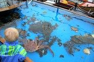 Fiskedam med krabber og hummer. Det var også demonstrasjon av rensing og bruk av krabbe begge dagene.