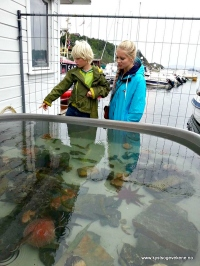 Fiskekum med lokale artar