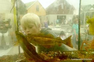 Kjekt å kunne sjå fisken på nært hald