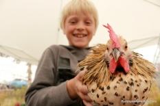 Stas å halde høner