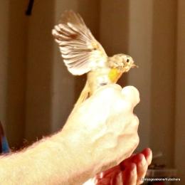 Kjekt å sjå fuglane på nært hald
